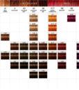 igor chart